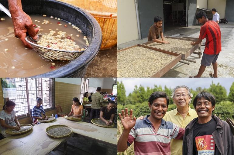 コーヒー豆の制作