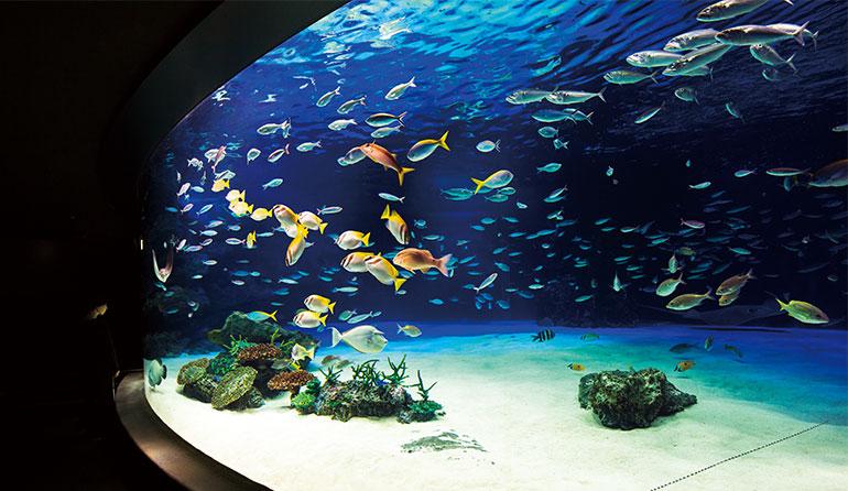 サンシャイン水族館 「サンシャインラグーン」
