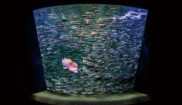サンシャイン水族館 「生命の躍動」