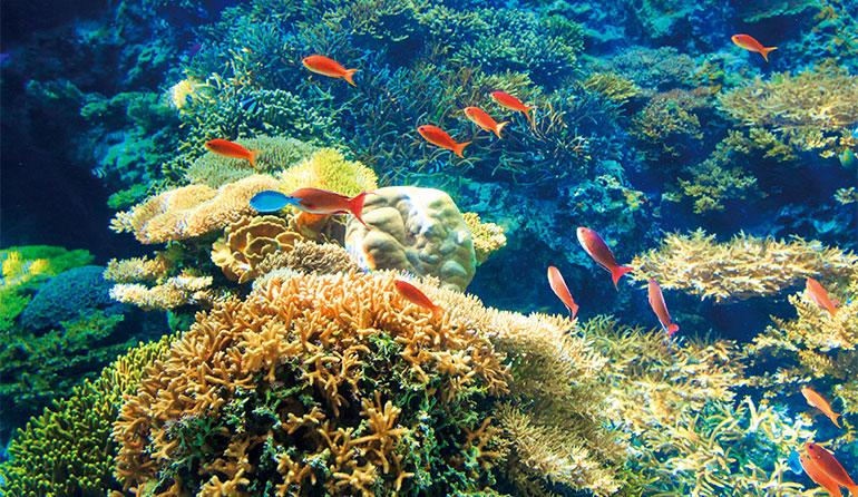 沖縄美ら海水族館 「サンゴの海」