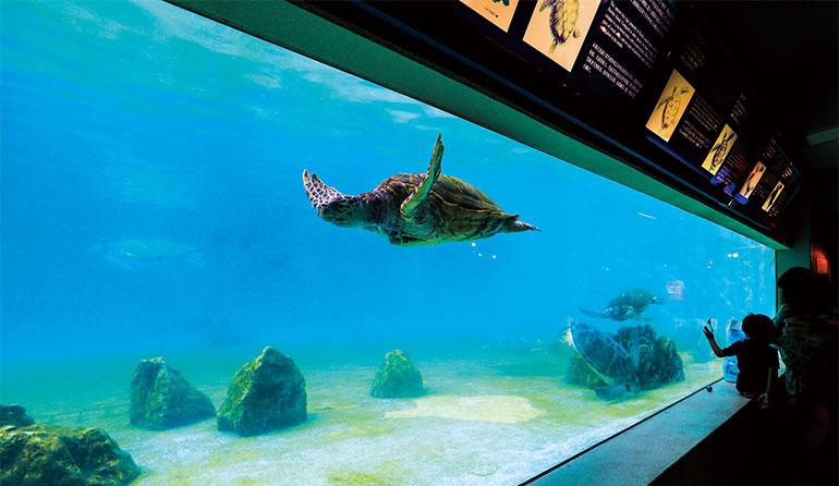 沖縄美ら海水族館 「ウミガメ館」