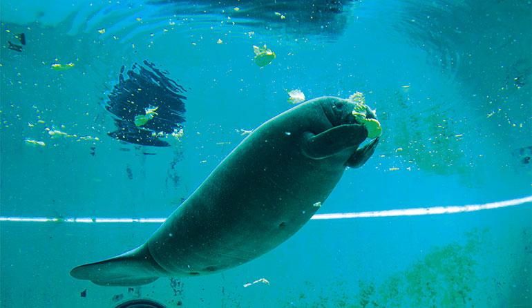 沖縄美ら海水族館 「マナティー館」